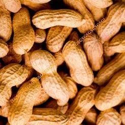 Peanuts Kernels Whole